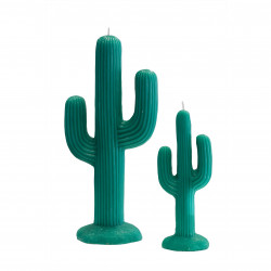 Candle Cactus