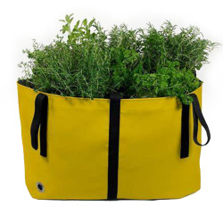 Green Bag Amarelo, Blooming...
